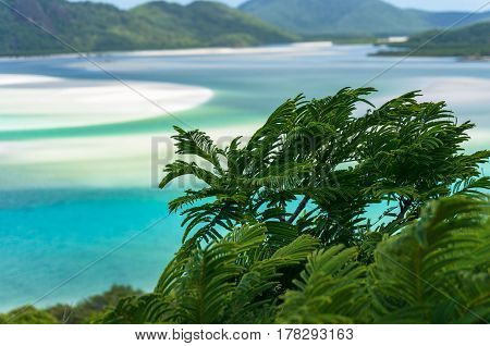 Green Tropical Plant Close Up With Tropical Landscape On Background