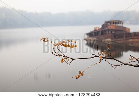 Autumn branch with yellow leaves and old rusty sunken ship in water in the background.