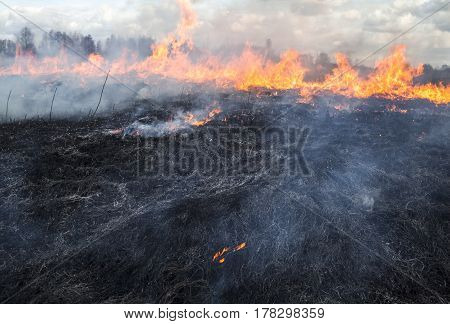 The big fire in the field. Burnt smoking grass in the foreground.