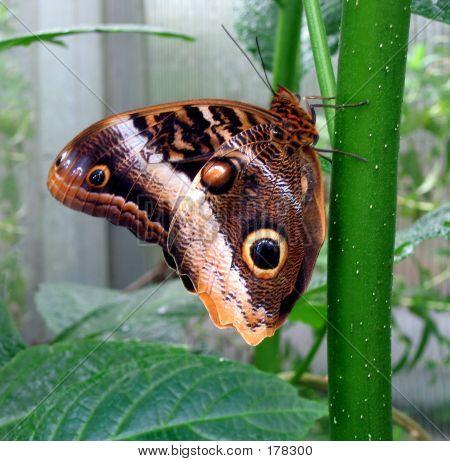 Colroful Moth