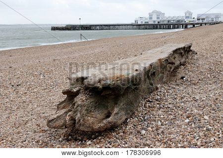 Driftwood washed up on the shore along the coast of southsea in england