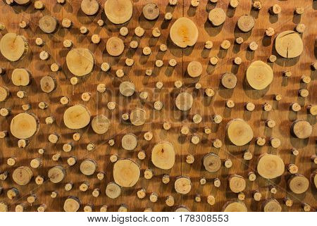 Closeup To Big And Small Round Shaped Of Wood Gnarl Background