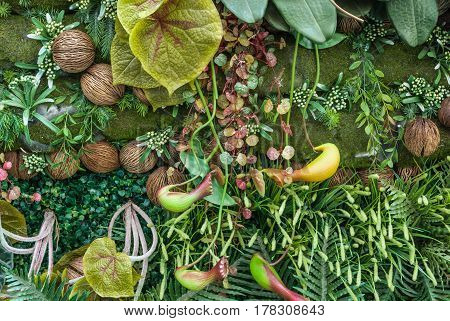 Closeup To Nepenthes/ Monkey Cups/ Tropical Pitcher Plants, Natural Background