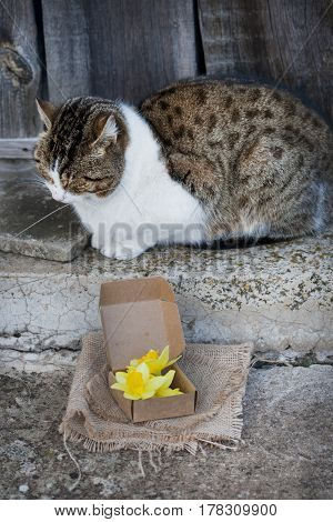 spring yellow daffodils in a vintage fabric and spotted a large cat on the porch near the wooden door