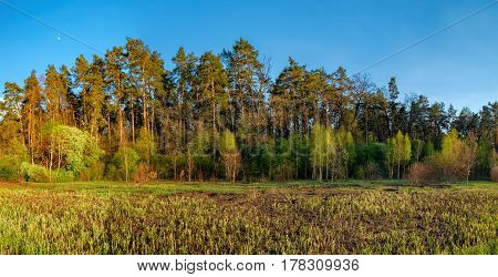 Mixed deciduous-coniferous forest landscape under evening sky with clouds in sunlight, Irpin, Ukraine. Green meadow with young grass the first spring greens.