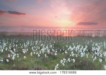 red misty sunrise over spring swamp North Brabant Netherlands
