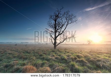misty sunrise over marsh and dead tree North Brabant Netherlands