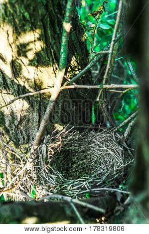 Close up empty birds nest in the tree.