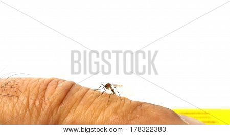 close up mosquito on the human skin,mosquito drinks blood out of man. mosquito causing dengue fever and malaria.