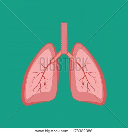 Lungs illustration on the green background. Vector illustration