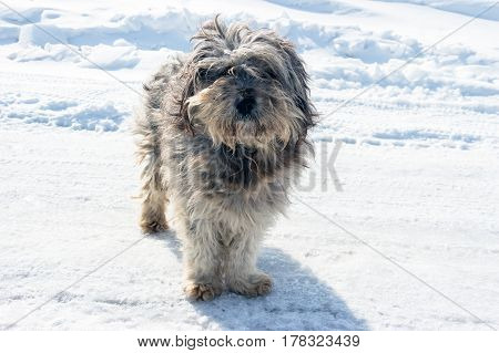 Homeless shaggy dog on the background of snow.