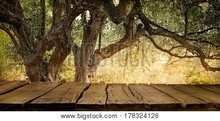 Olive tree with wooden table. Wood empty tabletop for your montage. Wood planks with olive orchard.