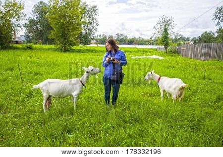 Rural funny scene in the girl with the goats in the green field. Communication with animals has beneficial effects on good mood.