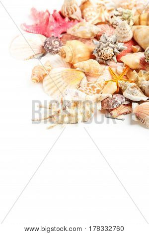 Sea shells on white background, close up