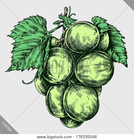 Engrave grape berry hand drawn graphic illustration