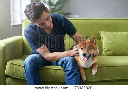 Young hansome male in blue t-shirt having fun with his lovely shiba inu dog snuggling stroking and petting sitting on green couch at home. Close friendship between owner and pet. Best friend.