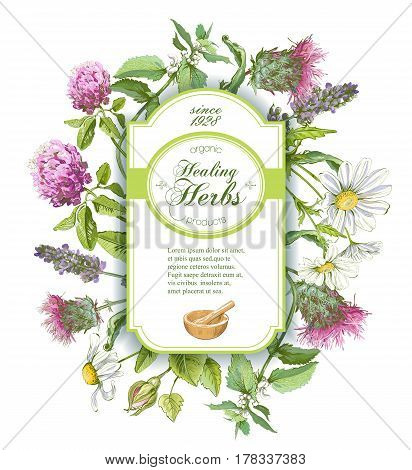 Vector healing herbs vertical banner on white background. Design for herbal tea, natural cosmetics, perfume, health care products, homeopathy, aromatherapy. With place for text