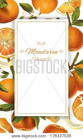 Vector mandarin vertical banner on white background. Design for sweets and pastries filled with citrus fruit, dessert menu, natural cosmetics, health care products. With place for text