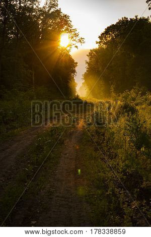Hiking path and sunset in beautiful woods view, inspirational summer landscape in forest. Walking footpath or biking path, dirt road. sunset, sun summer forest footpath