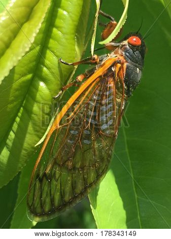 Cicadas emerged from the ground in 2016 after being in the ground for 17 years.