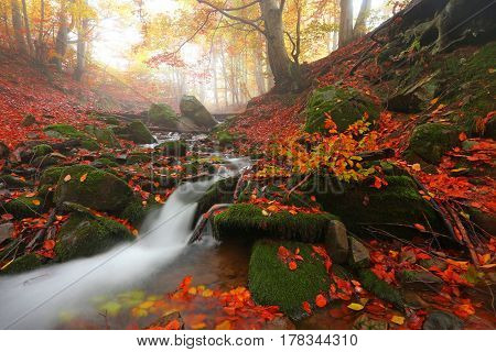 colorful autumn stream in forest landscape in the mountains, Europe travel mountains, beauty world