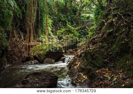 Nature beauty of small river in stones of tropical jungle forest at the Sacred Monkey Sanctuary Ubud Bali island Indonesia. Travel adventure photography of beautiful tropical nature