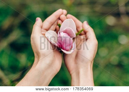 Woman Hands Holding Magnolia Pink Flower In Sunny Green Park. Tender Beauty Of Blooming In Botanical