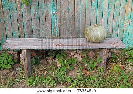 Single green pumpkin on a wooden bench. Russia.