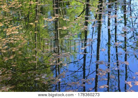Spring forest and blue reflection in water of pond