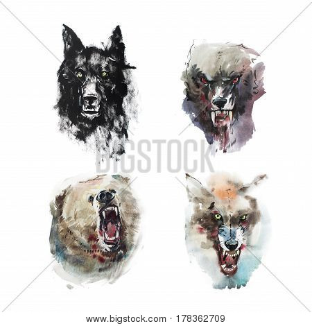 Watercolor drawing of angry looking wolfs and bear. Animal portrait on white background