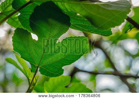 Bright green tropical leaf closeup  with  nice background