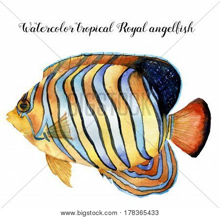 Watercolor Royal angelfish. Hand painted tropic fish isolated on white background. Underwater animal illustration for design, fabric or print