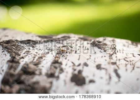 Wedding rings on the trunk tree bark