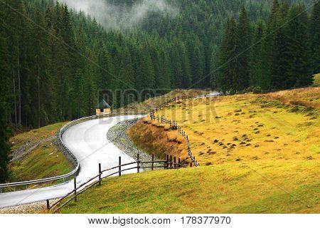 Free Winding Mountain Road