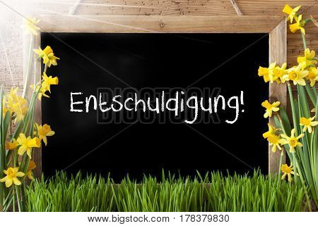 Blackboard With German Text Entschuldigung Means Excuse. Sunny Spring Flowers Nacissus Or Daffodil With Grass. Rustic Aged Wooden Background.