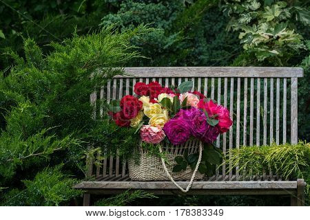 Basket with multi-colored roses on a bench in the summer garden.