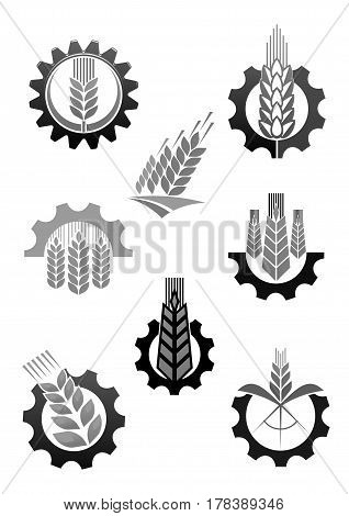 Agriculture and farming icons of wheat or rye ear and cogwheel. Grain milling factory and harvesting plant or farm house vector machine wheel tire symbol templates