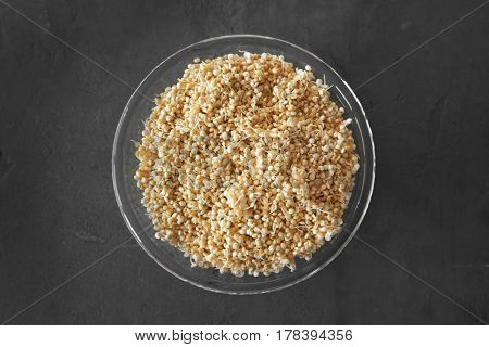 Top view of glass plate with sprouted organic white quinoa grains on dark background