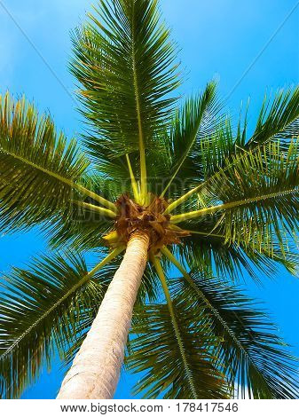 Coconut palm tree over bright blue cloudy sky