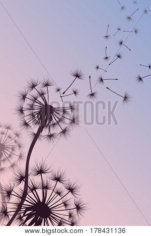 Dandelion with blowing spores vector abstract nature background. Silhouette of dandelion flower, illustration of tenderness fluffy dandelion