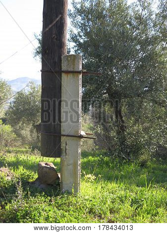 Short cut Telegraph pole supported by concrete post