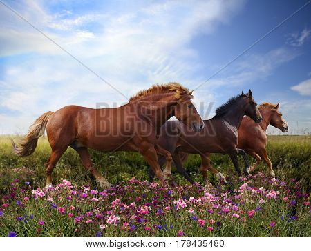 Three beautiful powerful horses jumping on a flowering meadow