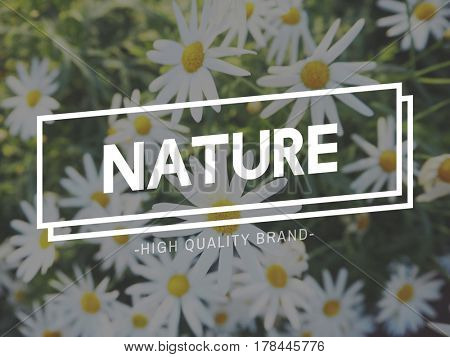 Blooming Botanic Flower Garden Nature Summer