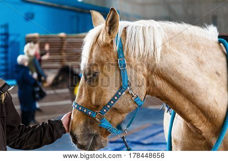 Beautiful horses of various breeds at the exhibition of horses