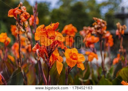 beautiful flowers in the park in spring time