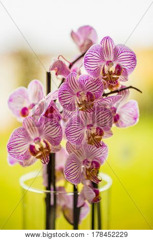 beautiful orchids in a vase near the window