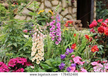 Flower - Canterbury Bells At Flower Show