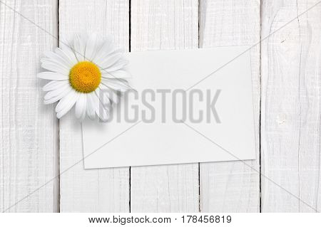 Blank greeting card and chamomile on white wooden background