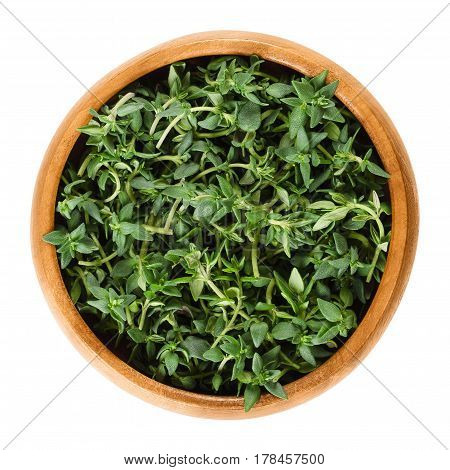 Fresh thyme stems in wooden bowl. Green herb with culinary, medicinal and ornamental uses. Thymus vulgaris is a relative of oregano. Isolated macro food photo close up from above on white background.