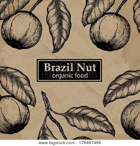 Brazil nuts tree design template. Vintage floral background. Vector illustration.